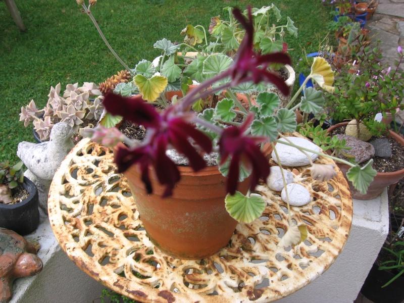 Des fleurs dans mon jardin Img_2631