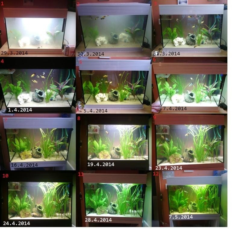Mon aquarium  Mon_aq10