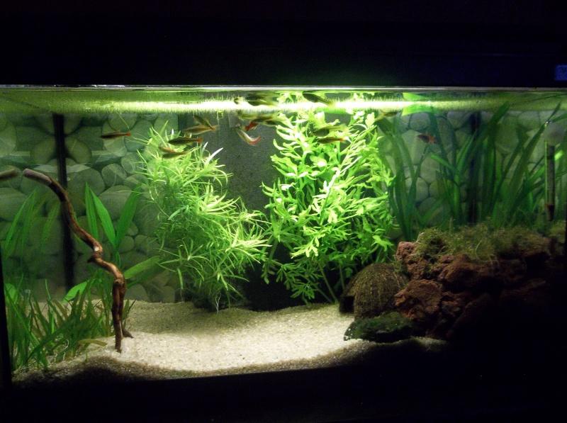 Mon aquarium - Page 2 105_2717