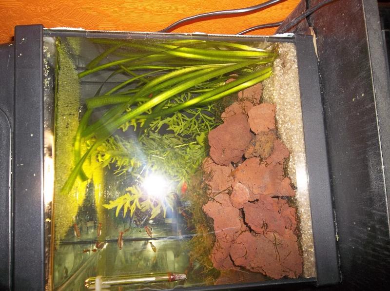 Mon aquarium - Page 2 105_2718