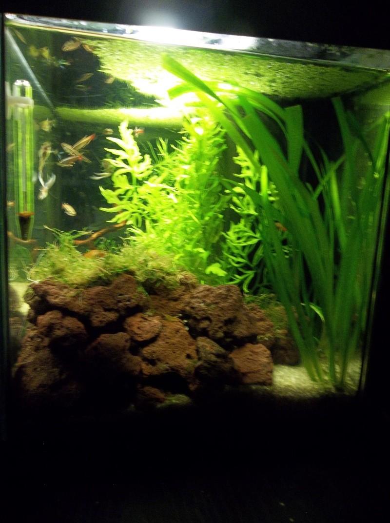Mon aquarium - Page 2 105_2719