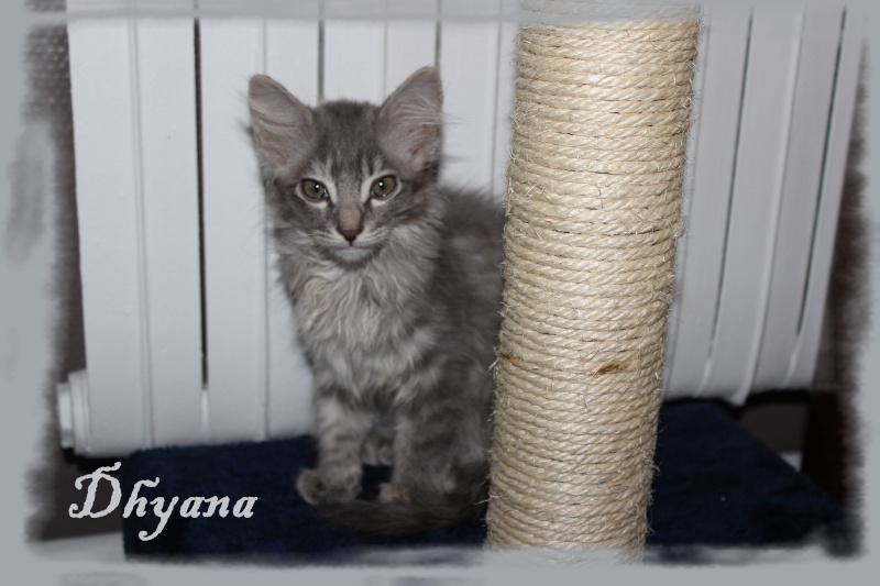 YUKI (Dhyana)  311