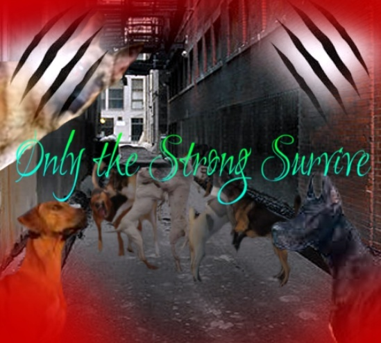 Only the strong survive Screen35