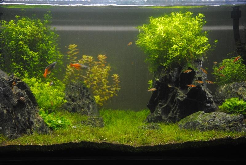 enfin mon aqua Dsc_0018