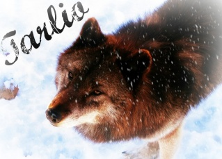 Entering forbidden land (Open to all wolves of the Pack of Never Ending Winter) Tarlio12