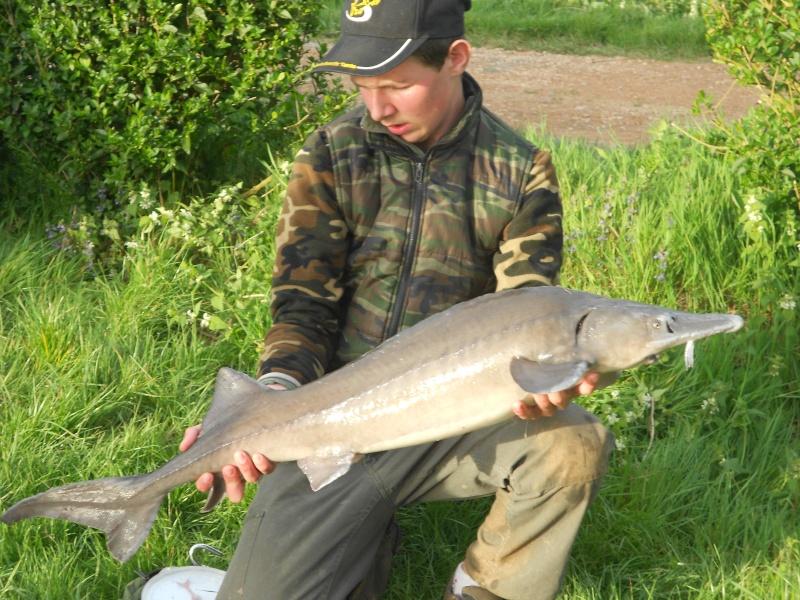 sortie pêche 2014 : Mon album photo [Petit Alexis] Dscn0621