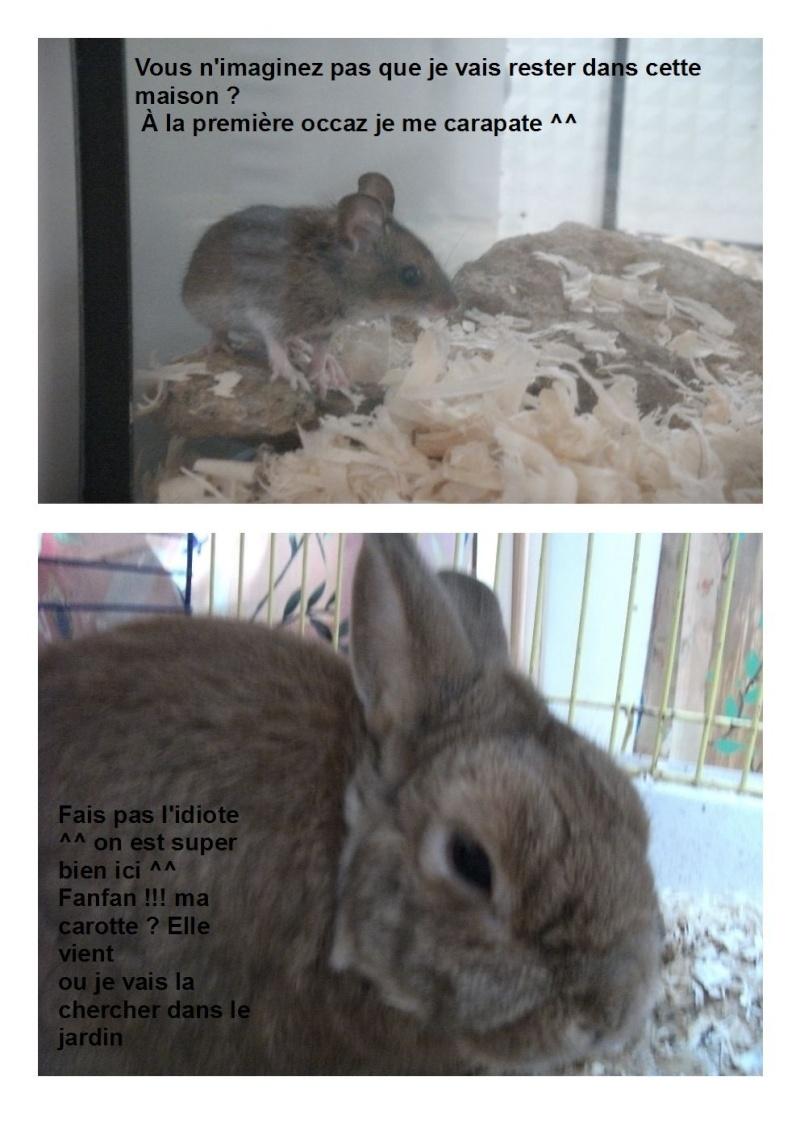 Nos autres animaux - Page 3 Cara_e10