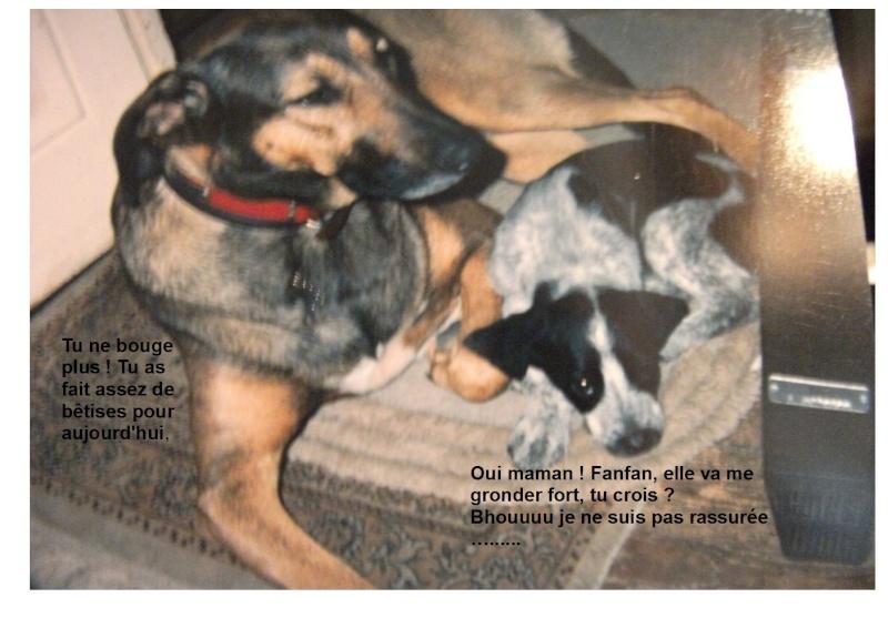 Nos autres animaux - Page 3 Lili_e11