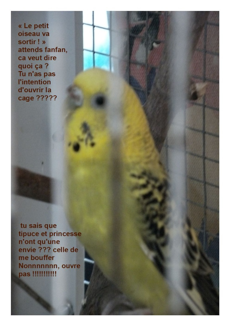 Nos autres animaux - Page 3 Piou_p10