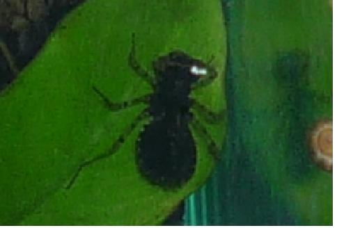 Une  larve de libellule - peur Bete210