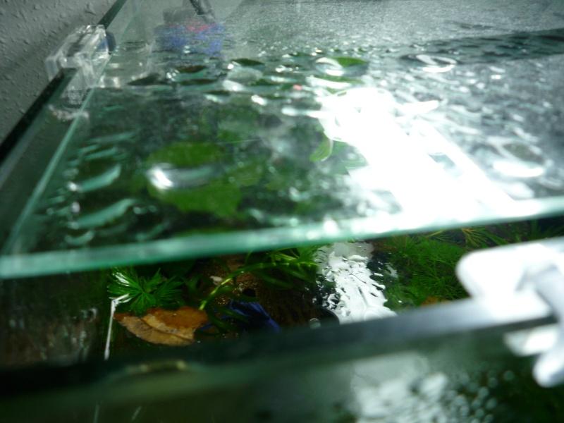 Condensation, comment faites- vous ? P1010714
