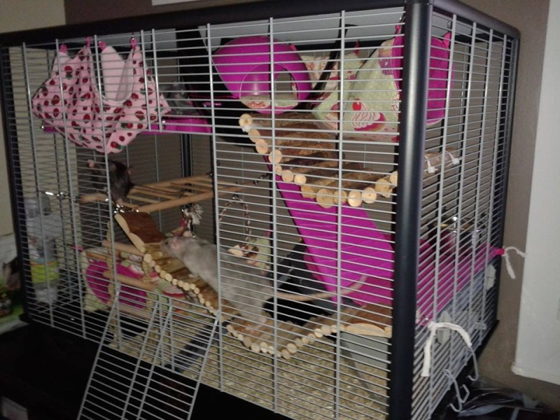 Photos de vos cages - Page 38 Cage110