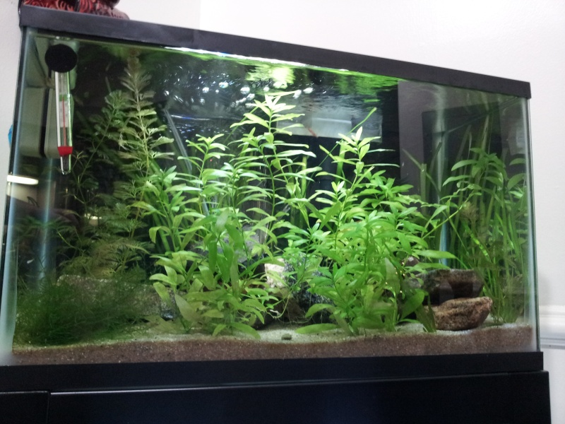 10 gallons planted aquarium with red cherry shrimps - Page 2 20131110