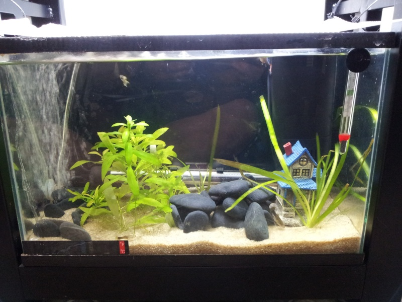10 gallons planted aquarium with red cherry shrimps - Page 2 20131111