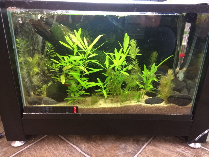 Update Red Cherry Shrimp Tank Image10