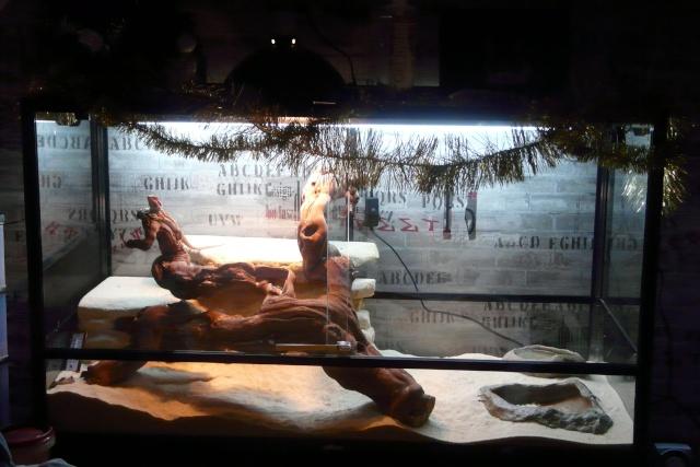 Mon terrarium (avec déco de Noël) Ari_0811