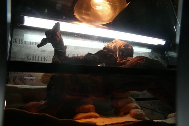 Mon terrarium (avec déco de Noël) Ari_0910