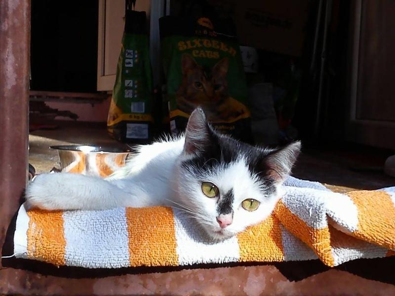 Daisy, minette de Roumanie Daisy_11