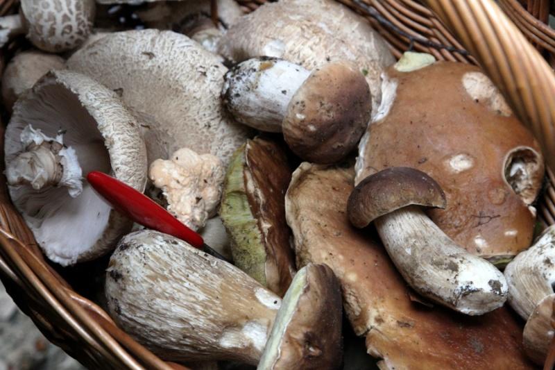 Sezona gljiva Gljiva10