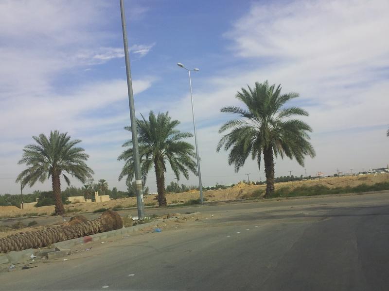 كشتة طريق حرض بالخرج 20131114