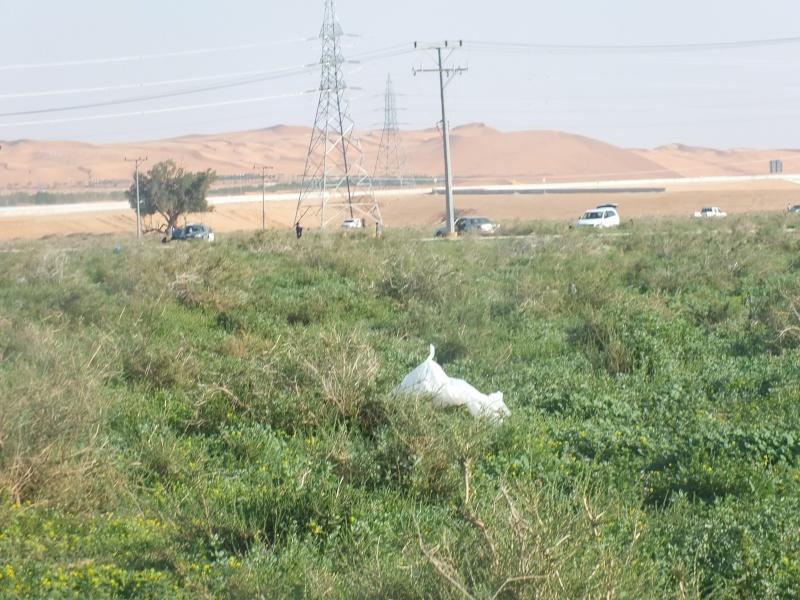 ربيع الرويضة بالخرج طريق الدلم  Dscf1212