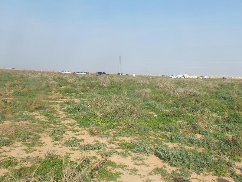 ربيع الرويضة بالخرج طريق الدلم  Dscf1218