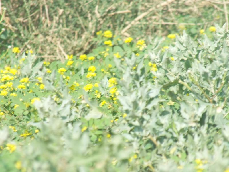 ربيع الرويضة بالخرج طريق الدلم  Dscf1221
