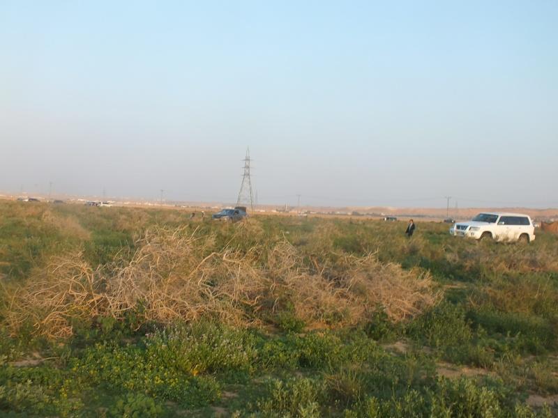 ربيع الرويضة بالخرج طريق الدلم  Dscf1310
