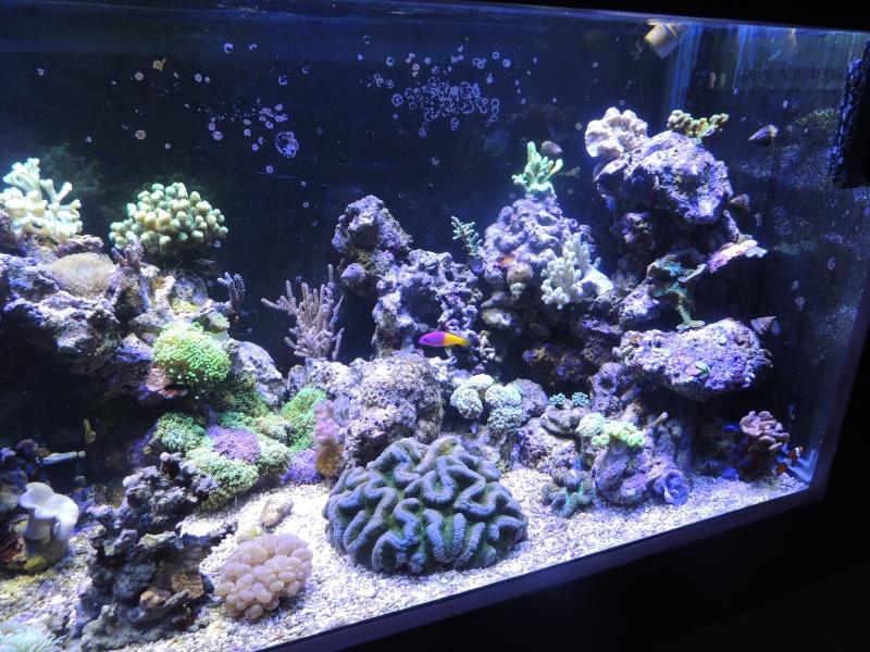 mon 300L eau de mer - Page 2 Dscn3415