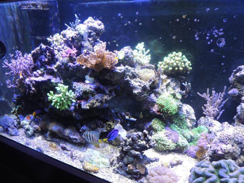 mon 300L eau de mer - Page 2 Dscn3416