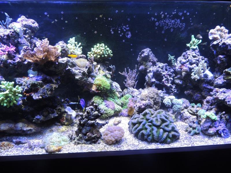 mon 300L eau de mer - Page 2 Dscn3417