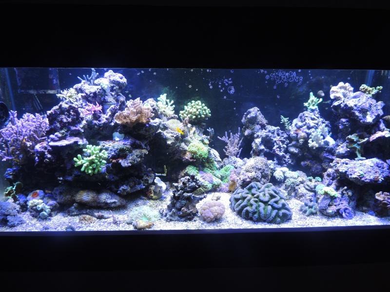 mon 300L eau de mer - Page 2 Dscn3418
