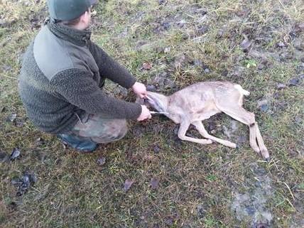 Après midi de chasse du 30 novembre 20131114