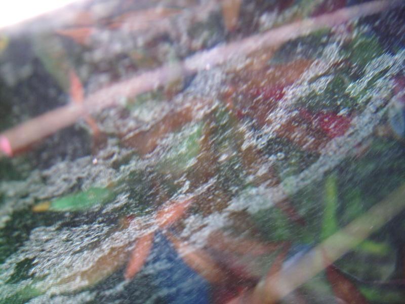 plantes pas belle Imgp0112