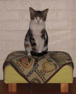 Colombine, jolie chatonne tigrée et blanche, née début juin 2013 - ADOPTEE par sa FA Co_111