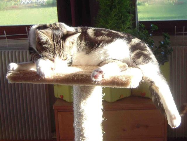 Colombine, jolie chatonne tigrée et blanche, née début juin 2013 - ADOPTEE par sa FA Co_pv710