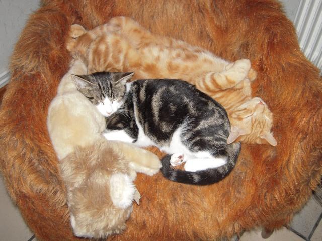 Colombine, jolie chatonne tigrée et blanche, née début juin 2013 - ADOPTEE par sa FA Dscn6210