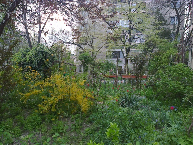 un beau jardin d'un immeuble de Bucarest Fotogr15