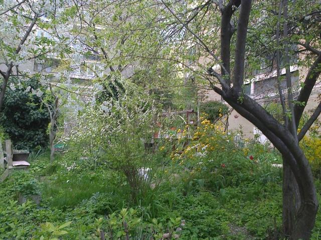 un beau jardin d'un immeuble de Bucarest Fotogr16