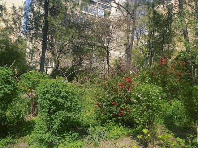 un beau jardin d'un immeuble de Bucarest Fotogr17
