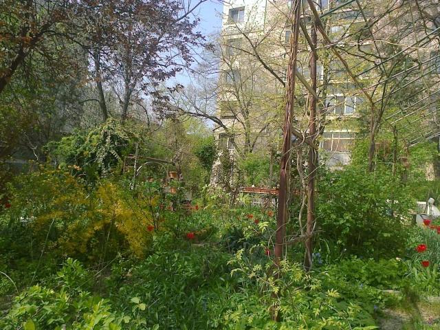 un beau jardin d'un immeuble de Bucarest Le_jar10