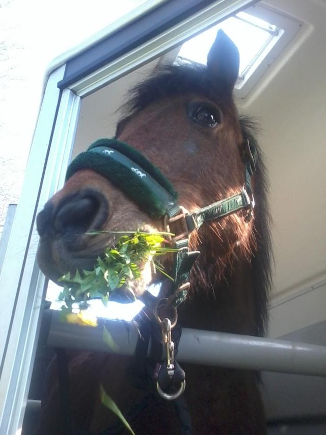 LEON - ONC poney né en 2000 - adopté en mars 2014 par Bilby - Page 2 20140316