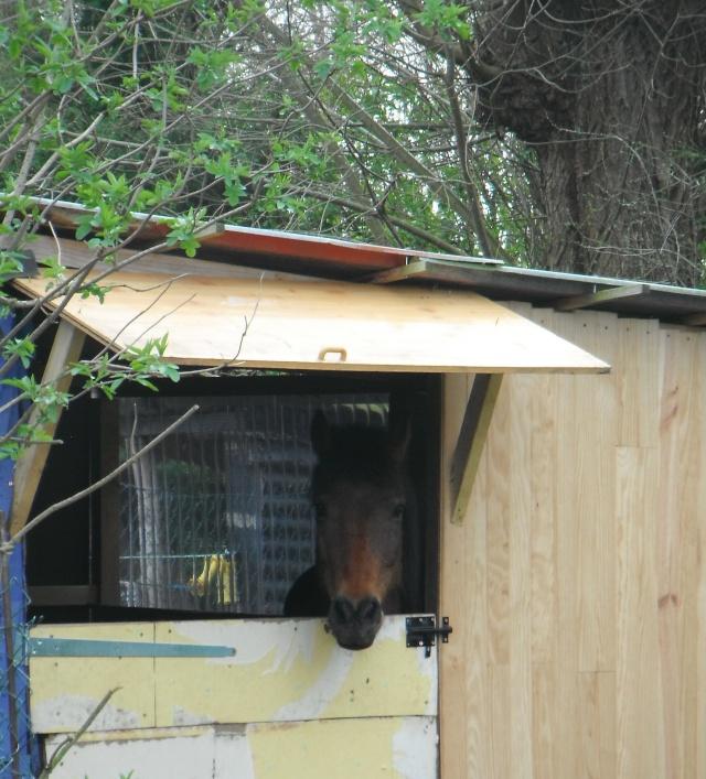 LEON - ONC poney né en 2000 - adopté en mars 2014 par Bilby - Page 2 Dscf0010