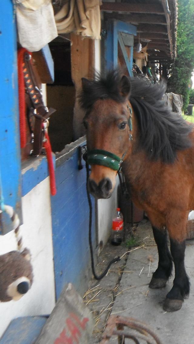 LEON - ONC poney né en 2000 - adopté en mars 2014 par Bilby - Page 2 Dscf0110