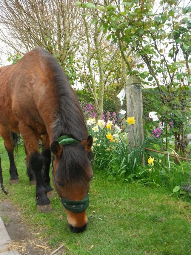 LEON - ONC poney né en 2000 - adopté en mars 2014 par Bilby - Page 2 Dscf0111