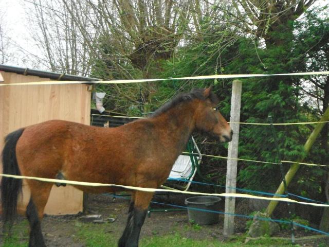 LEON - ONC poney né en 2000 - adopté en mars 2014 par Bilby - Page 2 Dscf0113