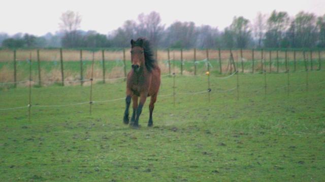 LEON - ONC poney né en 2000 - adopté en mars 2014 par Bilby - Page 2 File0410