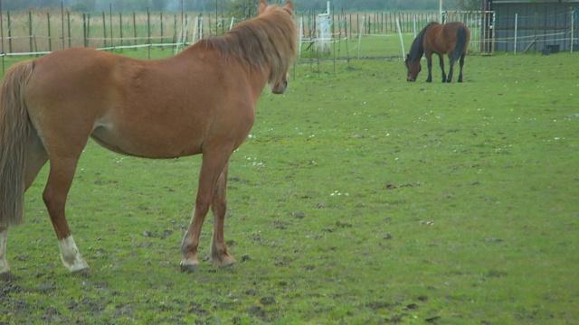 LEON - ONC poney né en 2000 - adopté en mars 2014 par Bilby - Page 2 File0412