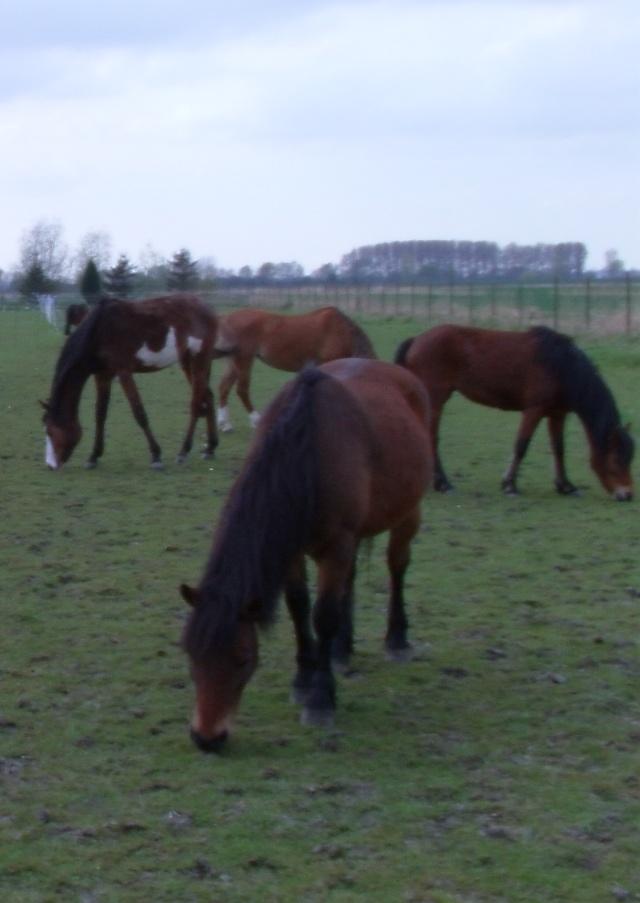 LEON - ONC poney né en 2000 - adopté en mars 2014 par Bilby - Page 2 File0511