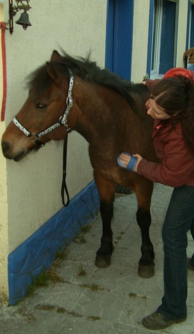 LEON - ONC poney né en 2000 - adopté en mars 2014 par Bilby - Page 2 File0710